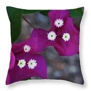 Desert Flower 2 Throw Pillow