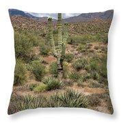 Desert Renewel Throw Pillow