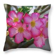 Desert Rose Or Chuanchom Dthb2105 Throw Pillow