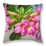 Desert Rose Or Chuanchom Dthb2106 Throw Pillow