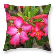 Desert Rose Or Chuanchom Dthb2108 Throw Pillow
