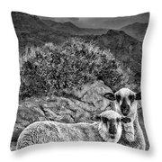 Desert Sheep Throw Pillow