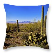 Desert Spring Throw Pillow by Chad Dutson