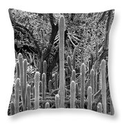 Desert Study 21 Throw Pillow