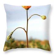 Desert Sun Flower Throw Pillow