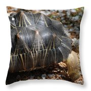 Desert Turtle With An Unusual Shell In The Wild Throw Pillow