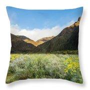 Desert View Throw Pillow