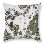 Detail Of Lichen On A White Rock Lake Throw Pillow
