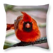 Determined Cardinal  Throw Pillow
