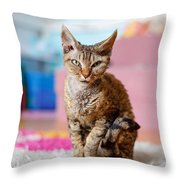 Devon Rex Purebred Domestic Cat Throw Pillow