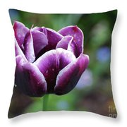 Dew Clinging To The Petals Of  A Tulip Blossom Throw Pillow