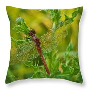 Dew Covered 5904 Throw Pillow