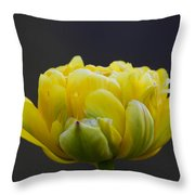 Dew Covered Yellow Tulip Throw Pillow