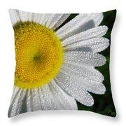 Dew Dazzled Daisy Throw Pillow