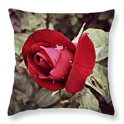Dew Drop Rose Throw Pillow