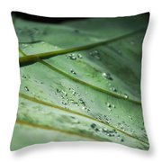 Dew Droplets Of Nature Throw Pillow