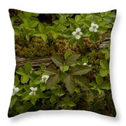 Dew Dropped Spring Bunchberries Throw Pillow