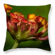Dew Drops In A Desert Garden Throw Pillow