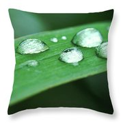 Dew Drops On A Blade Of Grass Throw Pillow
