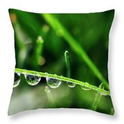 Dew Drops On Blade Of Grass Throw Pillow