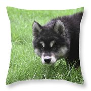 Dew Drops On The Nose Of An Alusky Puppy Dog Throw Pillow