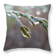 Dew Glaze Throw Pillow