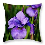 Dew Kissed Iris Throw Pillow