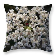 Dew On Queen Annes Lace Throw Pillow