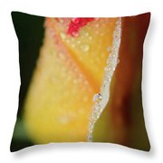 Dew On Yellow Rose Nature Photograph Throw Pillow