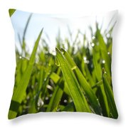 Dewdrops On New Wheat Throw Pillow