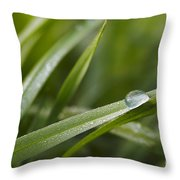 Dewy Drop On The Grass Throw Pillow