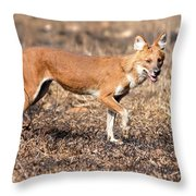Dhole In The Wild Throw Pillow