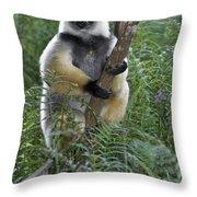Diademed Sifaka Throw Pillow