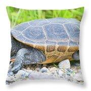Diamondback Terrapin Throw Pillow