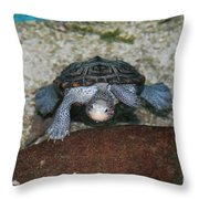 Diamondback Terrapin Throw Pillow by Lynn Jackson