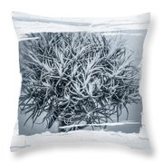 Dianthus Barbatus Bw Throw Pillow