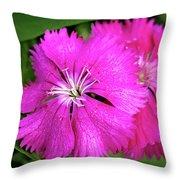 Dianthus First Love Flower Print Throw Pillow
