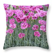 Dianthus Gold Dust Flowers Throw Pillow