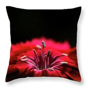 Dianthus In Desperation Throw Pillow