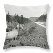 Dilemma On Highway #1, Chickaloon, Alaska Throw Pillow