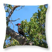 Ding Darling - Pileated Woodpecker Resting Throw Pillow