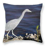 Ding Darling Wildlife Refuge Vii Throw Pillow