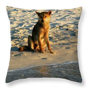 Dingo On The Beach Throw Pillow