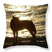 Dingo Sunset Throw Pillow