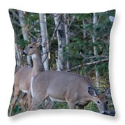 Dinner Time Does Throw Pillow