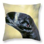 Dinosaur: Camarasaurus Throw Pillow