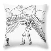 Dinosaur: Stegosaurus Throw Pillow