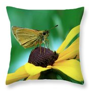 Dion On A Brown Eyed Susan Throw Pillow