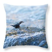 Dipper Searching For Food Throw Pillow