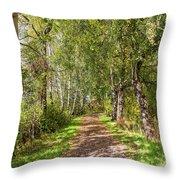 Dirt Path In A Birch Grove  Throw Pillow